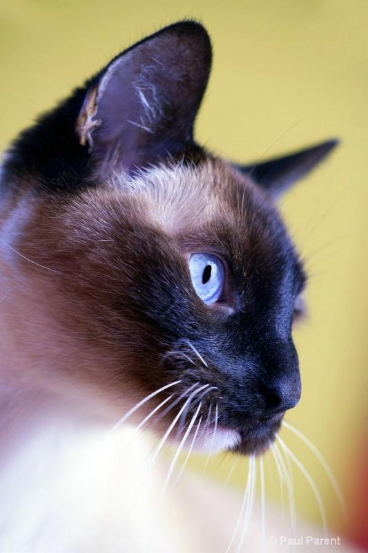 A Cat Look