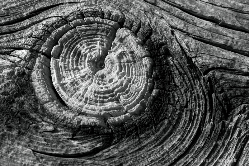 Knot in the Wood