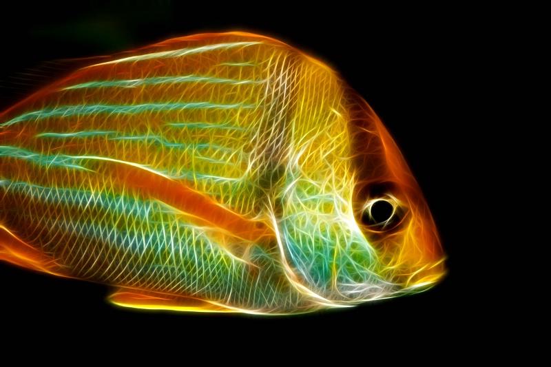 OBX Fish--Fractalius