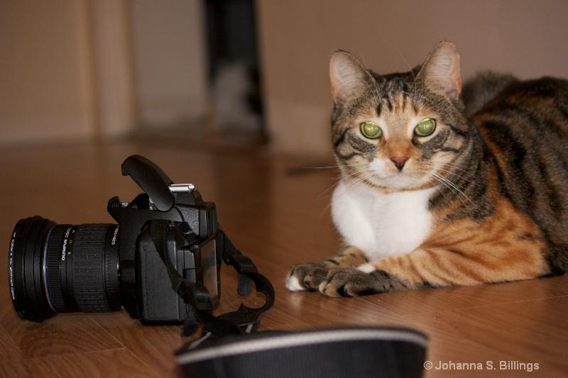Budding Photographer?