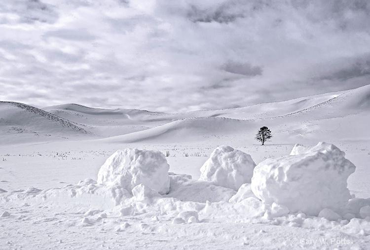 Hayden Valley Monochrome