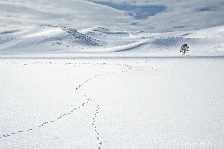 Hayden Valley Tracks