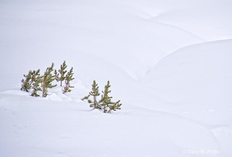 Winter's Simplicity