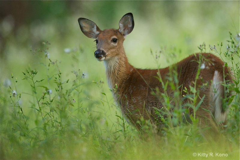 Little Fawn in the Wildflowers