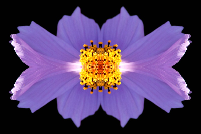Flower at Oatlands--Kaleidoscope