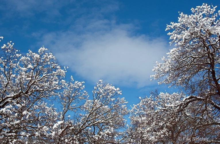 Snowy Oaks w/ Cloud 2