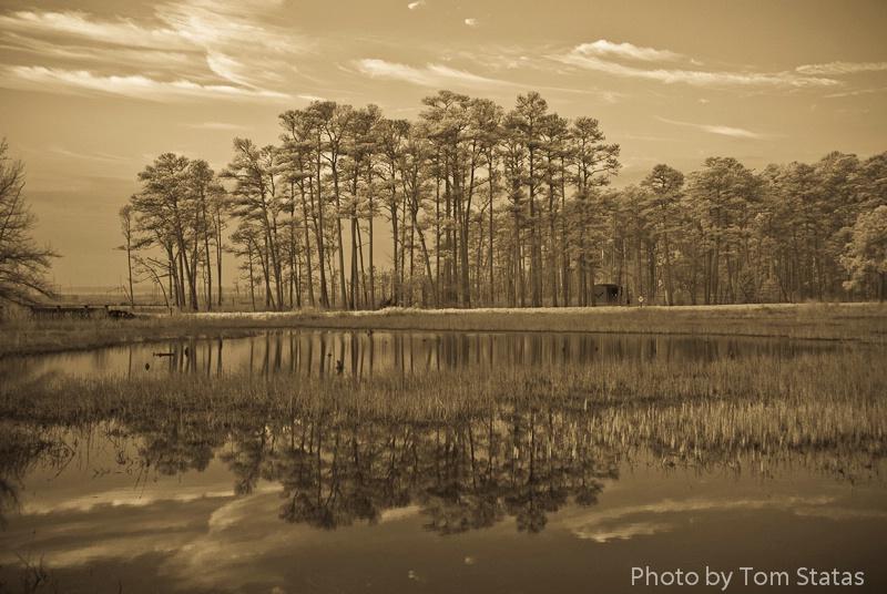 Blackwater NWR, MD