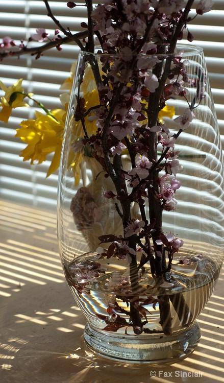 Window Flowers 3