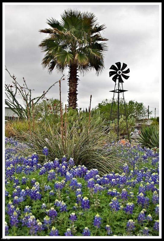 Windmill, Palm Tree and Blue Bonnets