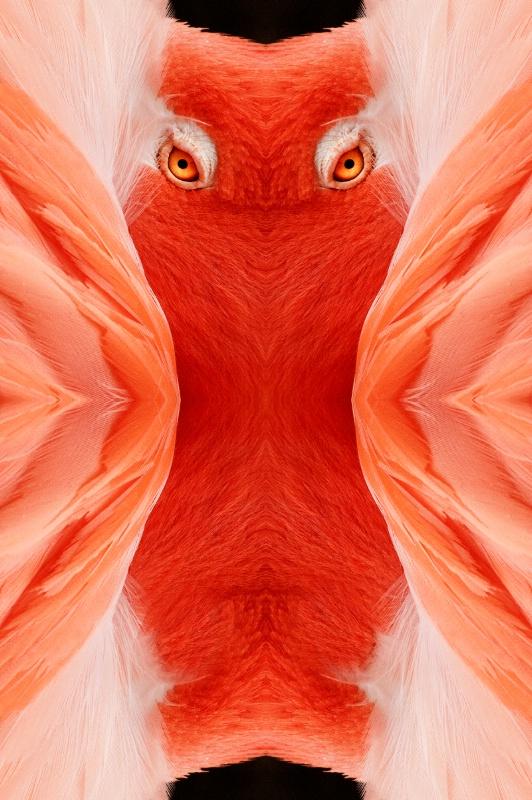 Vert Flamingo-- Kaleidoscope