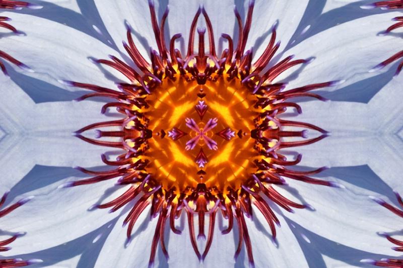 LG Water Lily--Kaleidoscope