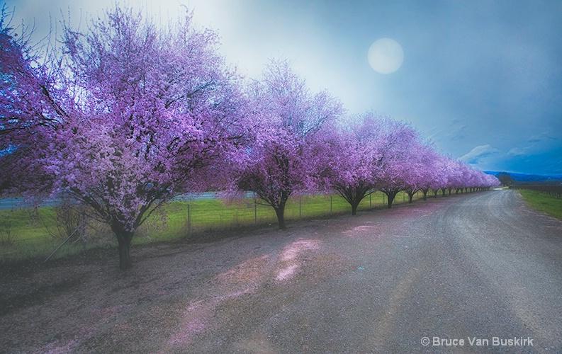 flowering plums