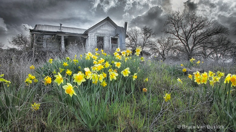 old house new flowers