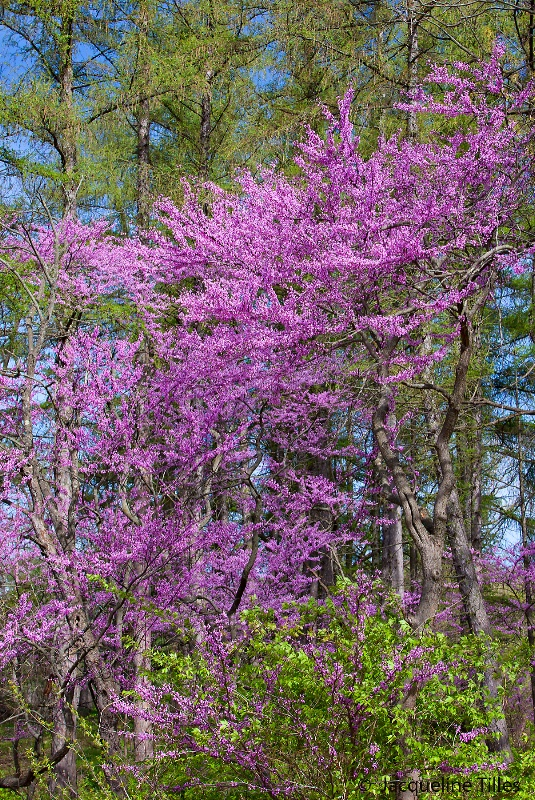 Wild Spring Collage