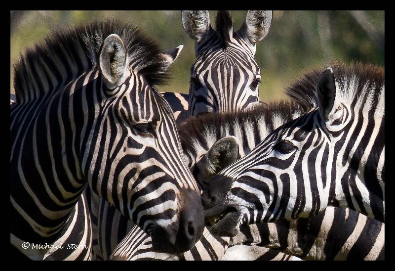 Zebra Confrence