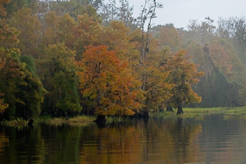Blue Cypress Lake shoreline 1
