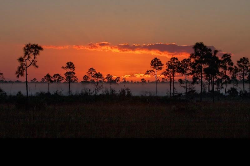 Orange Sunrise in the everglades