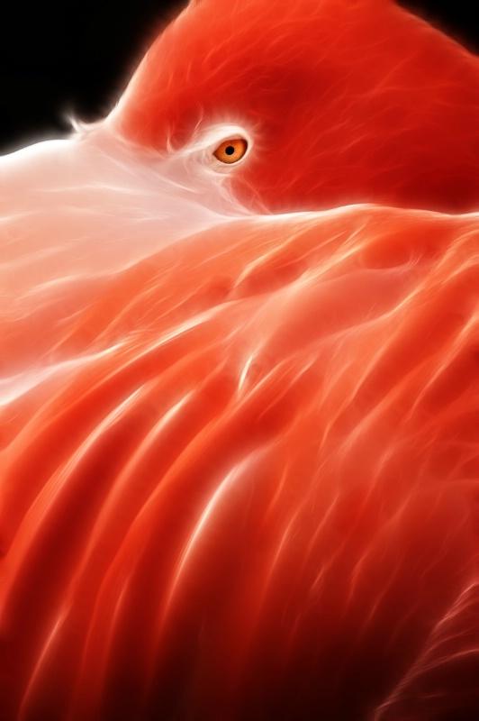 Fractalius Vertical Flamingo