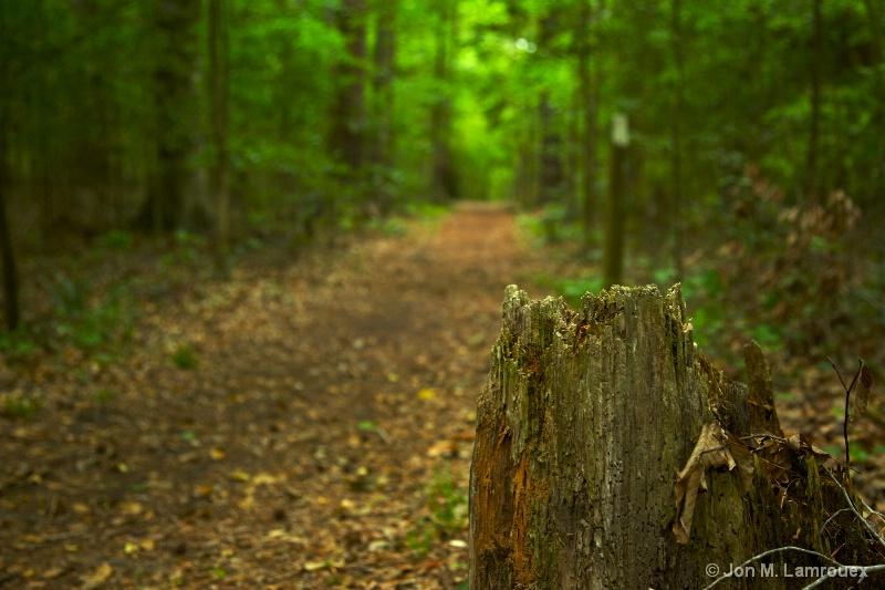 Stump in the Path