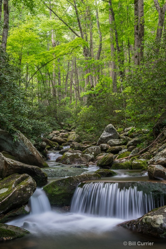 LeConte Creek - Smoky Mountains