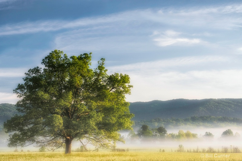 Old Oak in the Mist - Cades Cove
