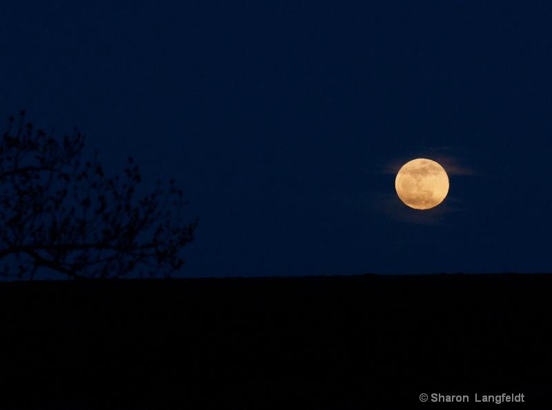 Super Moon in the Dark Sky