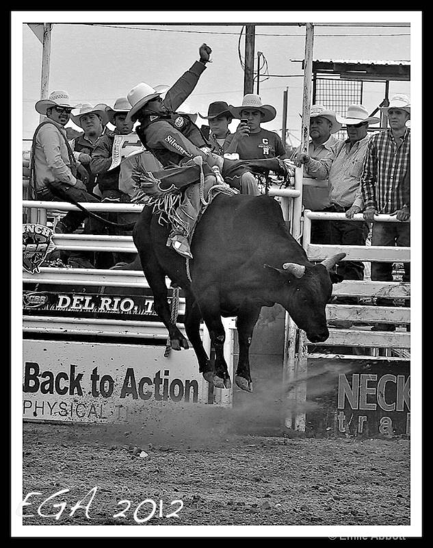 Bull Riding George Paul Memorial Style