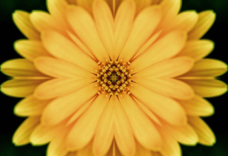 Yellow Flower Distortion