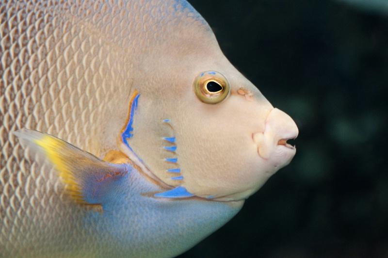 Colorful Atlanta Fish