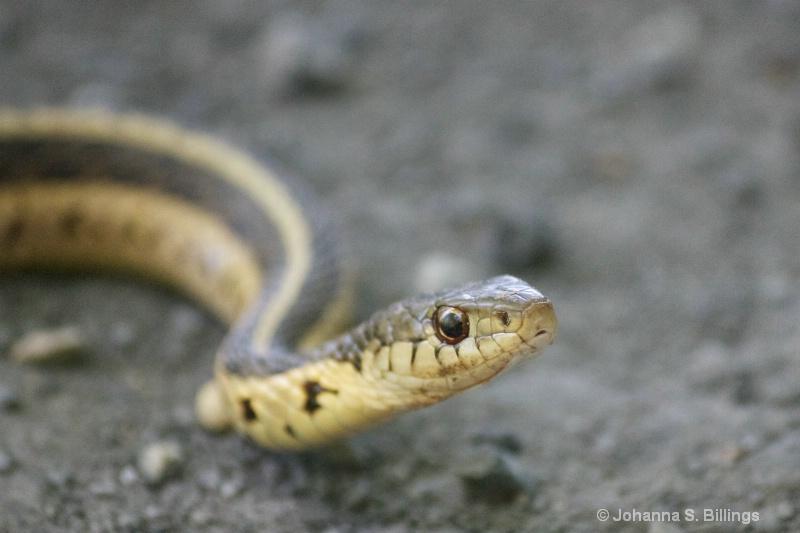 Snake Face