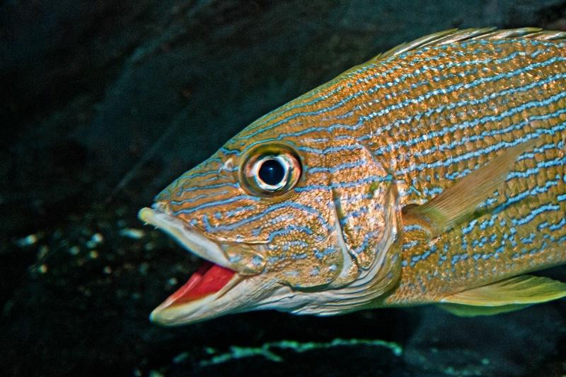 Atlanta Aquarium Fish
