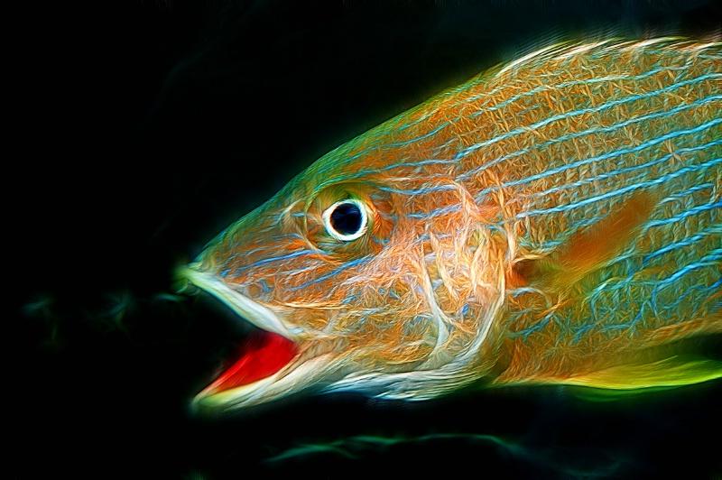 Atlanta Aquarium Fish-Fractalius