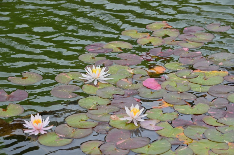 Channeling Monet