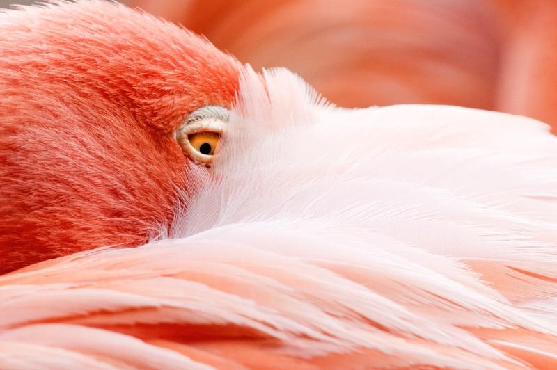 Colorful Flamingo #2