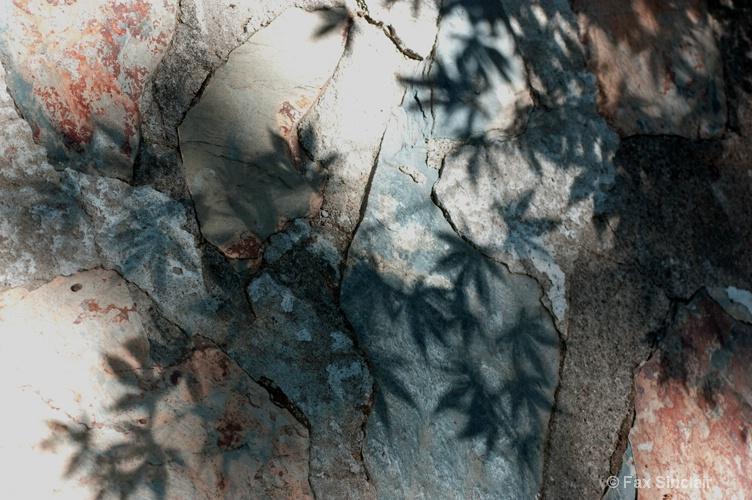 Maple Shadows 1