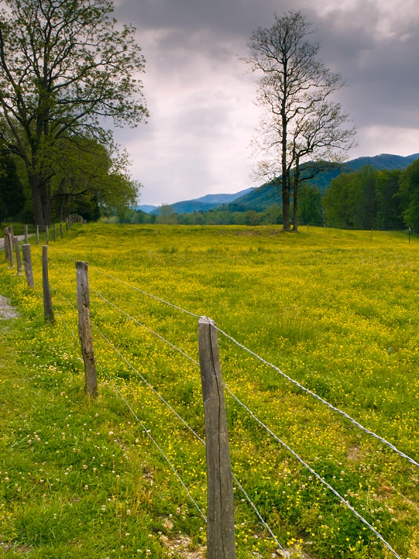 Fence Line on Cades Cove Loop