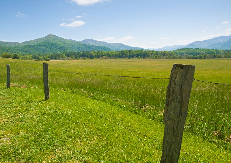 Fence and Meadow