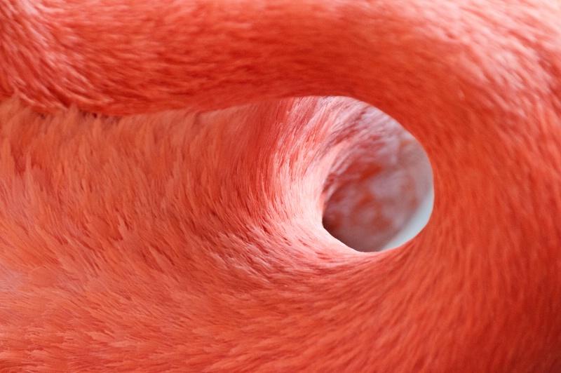 Flamingo Circle