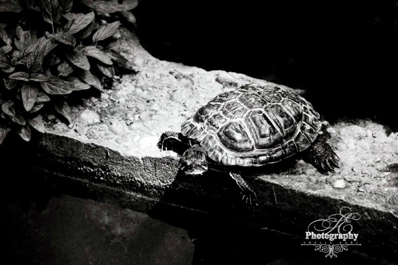 Turtle in the Spotlight@@Skopje, Macedonia Zoo