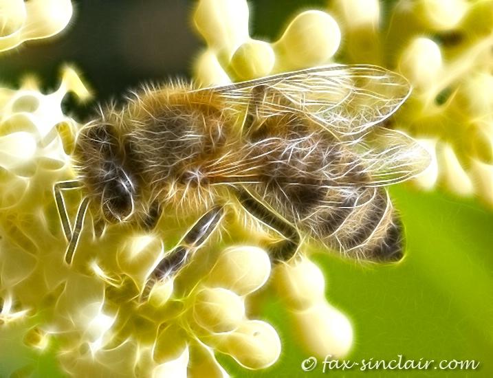 Bee Fractalius 2
