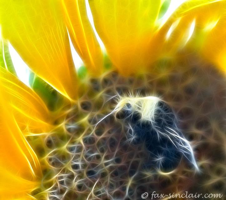 Sunflower Suite 1