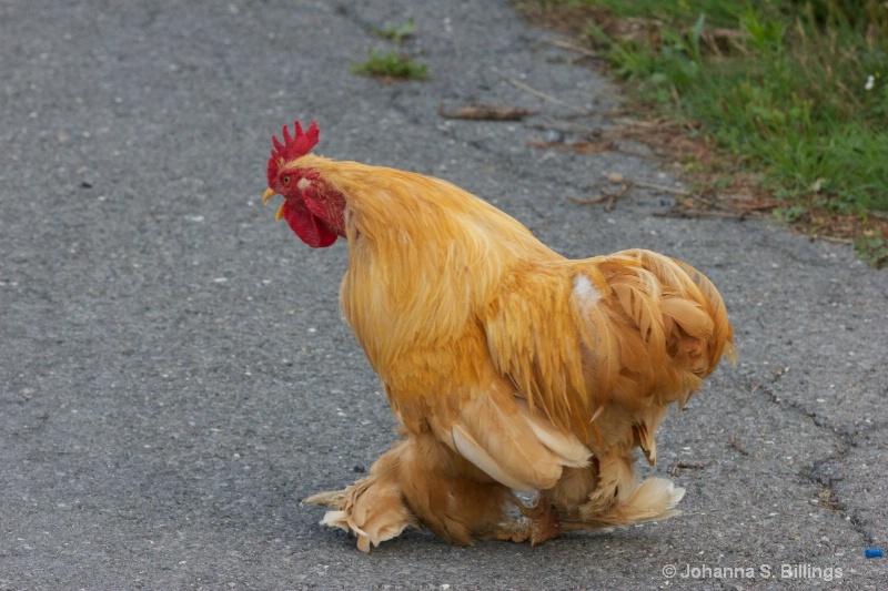 I am Chicken. Hear me roar!