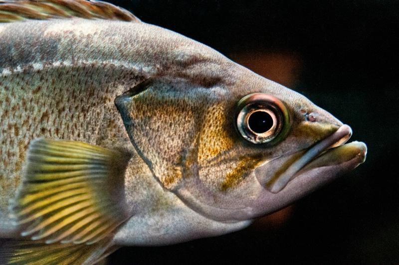 Seattle Fish