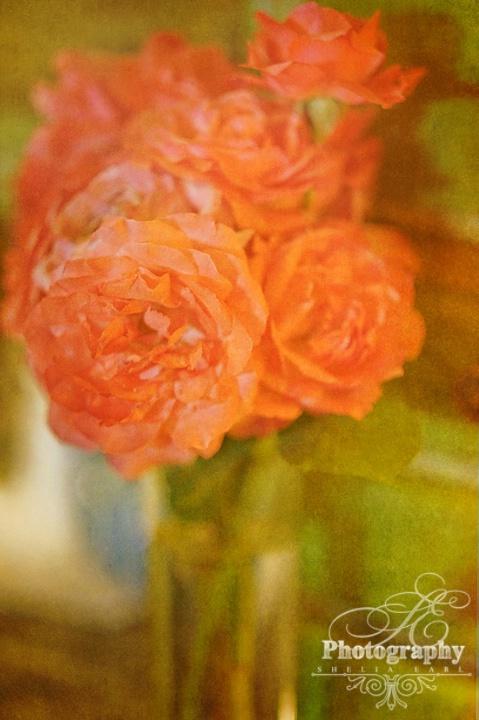 Last of My Roses