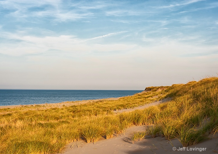 Dune Grasses by the Sea