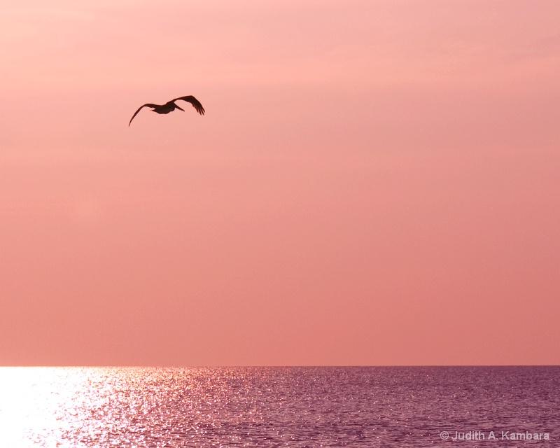 pelican's sunset flight