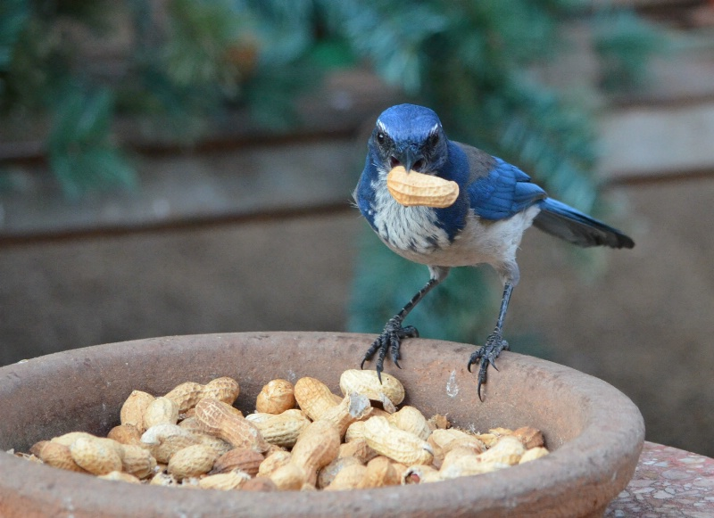 Stay away from the peanuts.