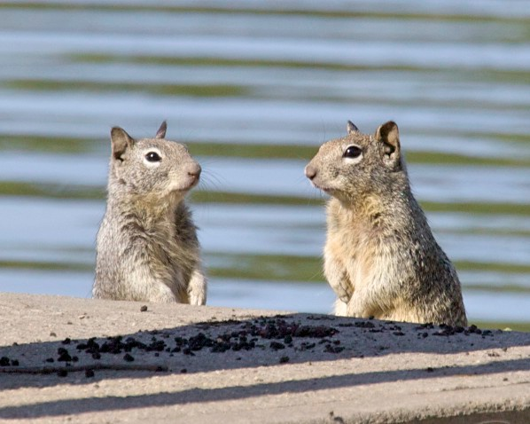 Two squirrels were sitting at a bar ...