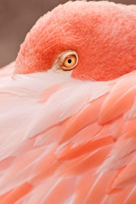 Colorful Flamingo 110