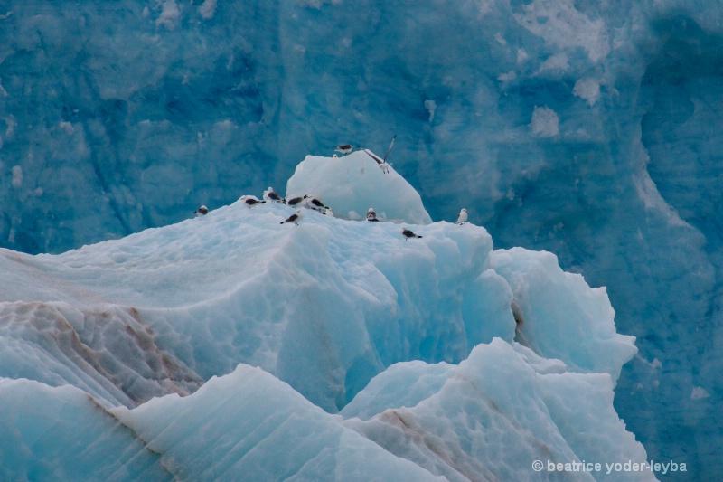 2011 arctic trip - 030